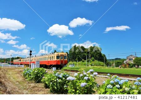 小湊鉄道を彩る紫陽花の風景 41217481