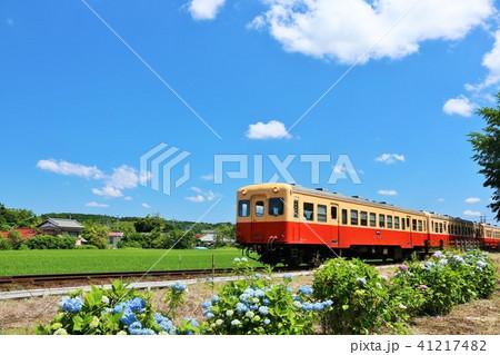小湊鉄道を彩る紫陽花の風景 41217482