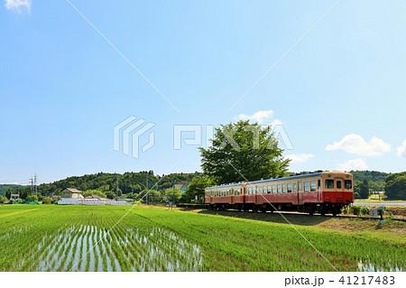 初夏の田んぼ風景と小湊鉄道 41217483