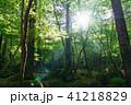 栃木県鹿沼市 横根高原(5月) 41218829