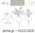 マカの線画(デジタルトレース) 41221826