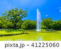 代々木公園 公園 新緑の写真 41225060