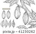 カカオの木の線画(アナログ) 41230262