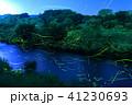 ゲンジボタル ホタル 光跡の写真 41230693