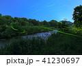 ゲンジボタル ホタル 光跡の写真 41230697