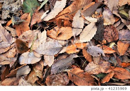 秋の紅葉が彩る落ち葉、もみじ 41235969