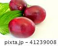 パッションフルーツ 果物 トロピカルフルーツの写真 41239008