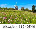 花博記念公園の風車とコスモス 41240540