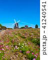 花博記念公園の風車とコスモス 41240541