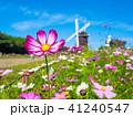 花博記念公園のコスモスと風車 41240547