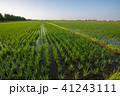 水田 風景 田んぼの写真 41243111