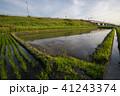 水田 風景 田んぼの写真 41243374