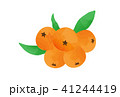 びわ 枇杷 果実のイラスト 41244419