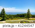 淡路島 あわじ花さじき 花壇の写真 41244547