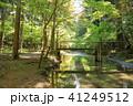 森林浴 41249512