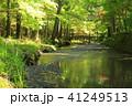 森林浴 41249513