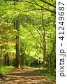 森林浴 41249687