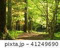 森林浴 41249690