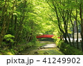 森林浴 41249902