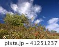霧ヶ峰 初夏 青空の写真 41251237