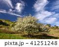 霧ヶ峰 初夏 青空の写真 41251248