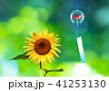 風鈴と向日葵 41253130