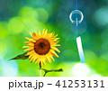 風鈴 風物詩 夏の写真 41253131