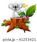 コアラ 動物 草のイラスト 41253421