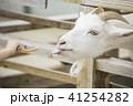 柵から顔を出してエサをもらうヤギ 41254282