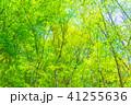 新緑エコイメージ 41255636