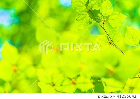 新緑エコイメージ 41255642
