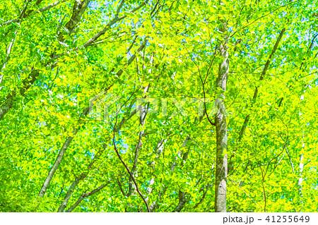 新緑エコイメージ 41255649