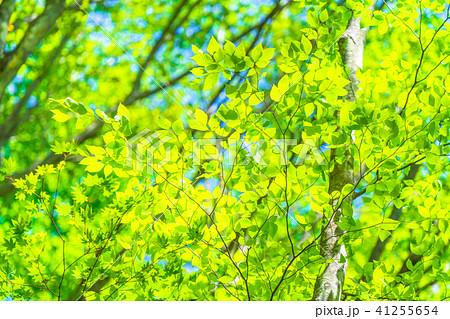 新緑エコイメージ 41255654