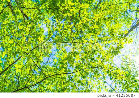新緑エコイメージ 41255687