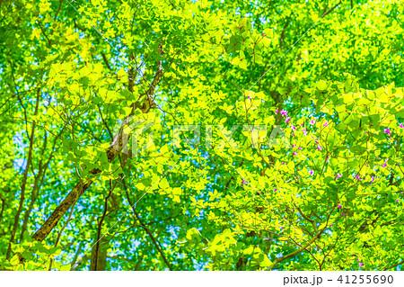 新緑エコイメージ 41255690