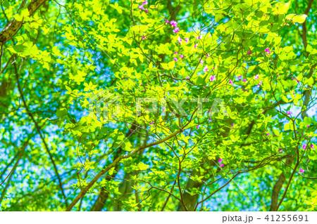 新緑エコイメージ 41255691