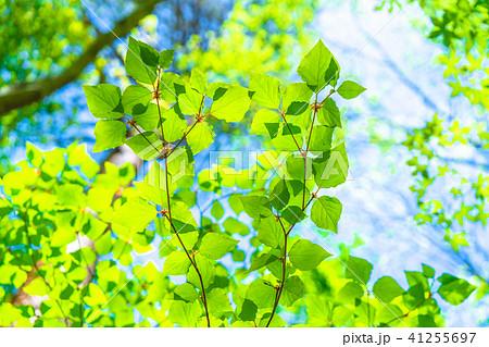 新緑エコイメージ 41255697