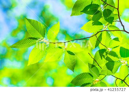 新緑エコイメージ 41255727