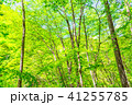 新緑エコイメージ 41255785