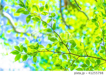 新緑エコイメージ 41255798