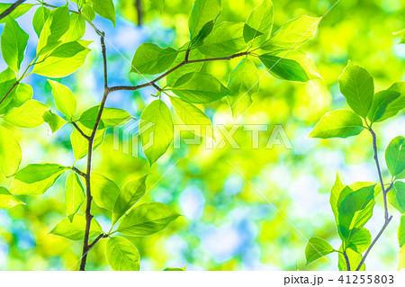 新緑エコイメージ 41255803