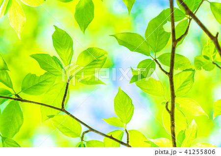新緑エコイメージ 41255806
