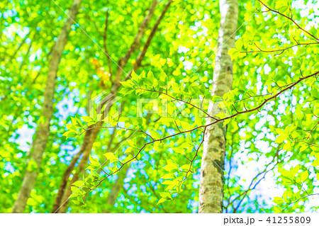 新緑エコイメージ 41255809