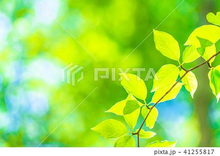 新緑エコイメージ 41255817