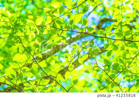 新緑エコイメージ 41255818