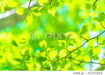 新緑エコイメージ 41255820