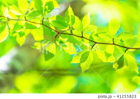 新緑エコイメージ 41255823