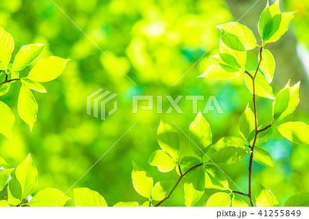新緑エコイメージ 41255849