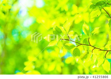 新緑エコイメージ 41255866