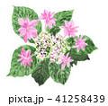花 がくあじさい ピンク色のイラスト 41258439